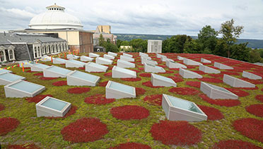 Milstein Hall's green roof.