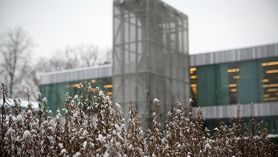 snow on plants with a modern building in the background