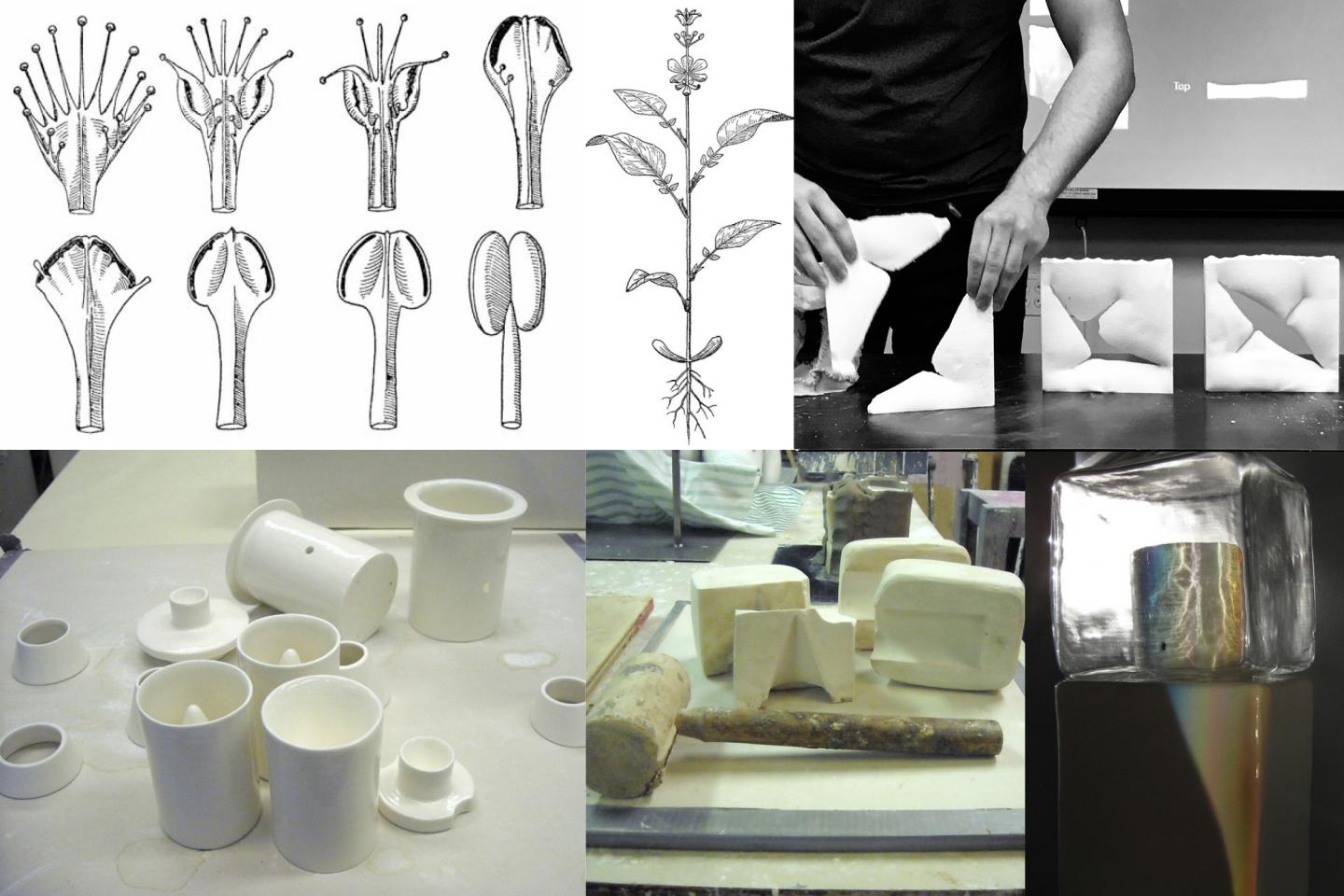 A composite of five images of drawings of plant stages, plaster fasts, and tools