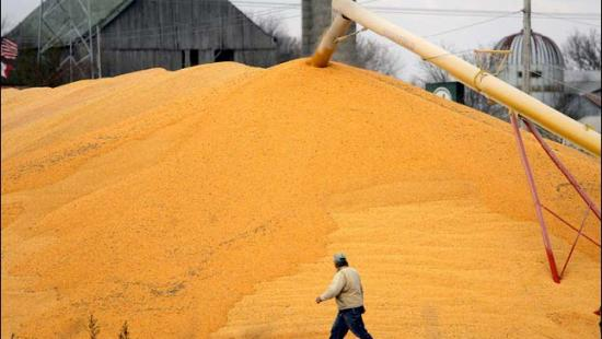 Person walking in front of large pile of dried corn