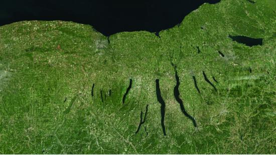 green landmass of of upstate new york region with the finger lakes depicted in black.