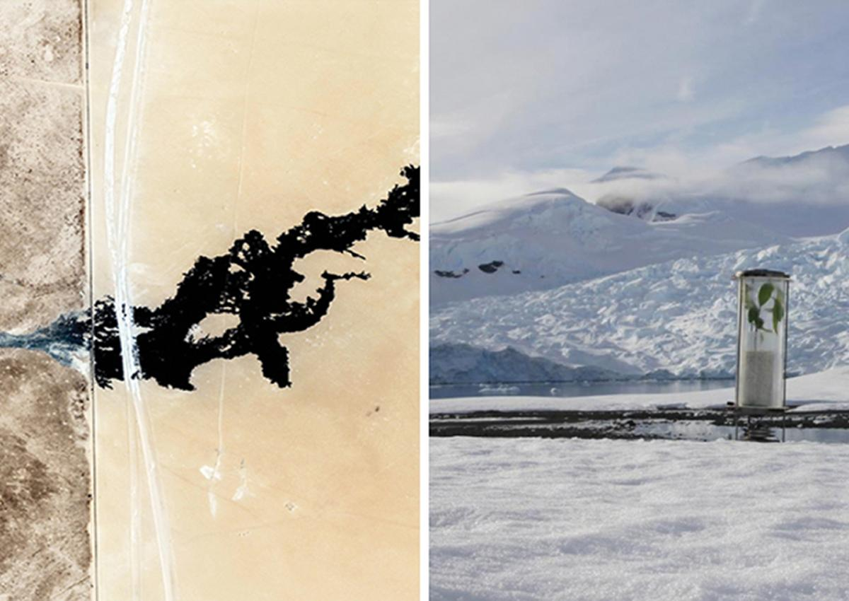 On the left an aerial view of the Kuwait pavilion, mostly desert landscape, and on the right is a view of a plant in a glass jar in the middle of an Arctic landscape near water and snowy mountains