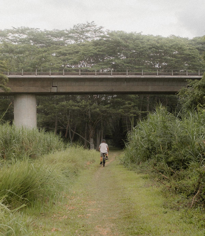 a cyclist riding down a green path toward an overpass