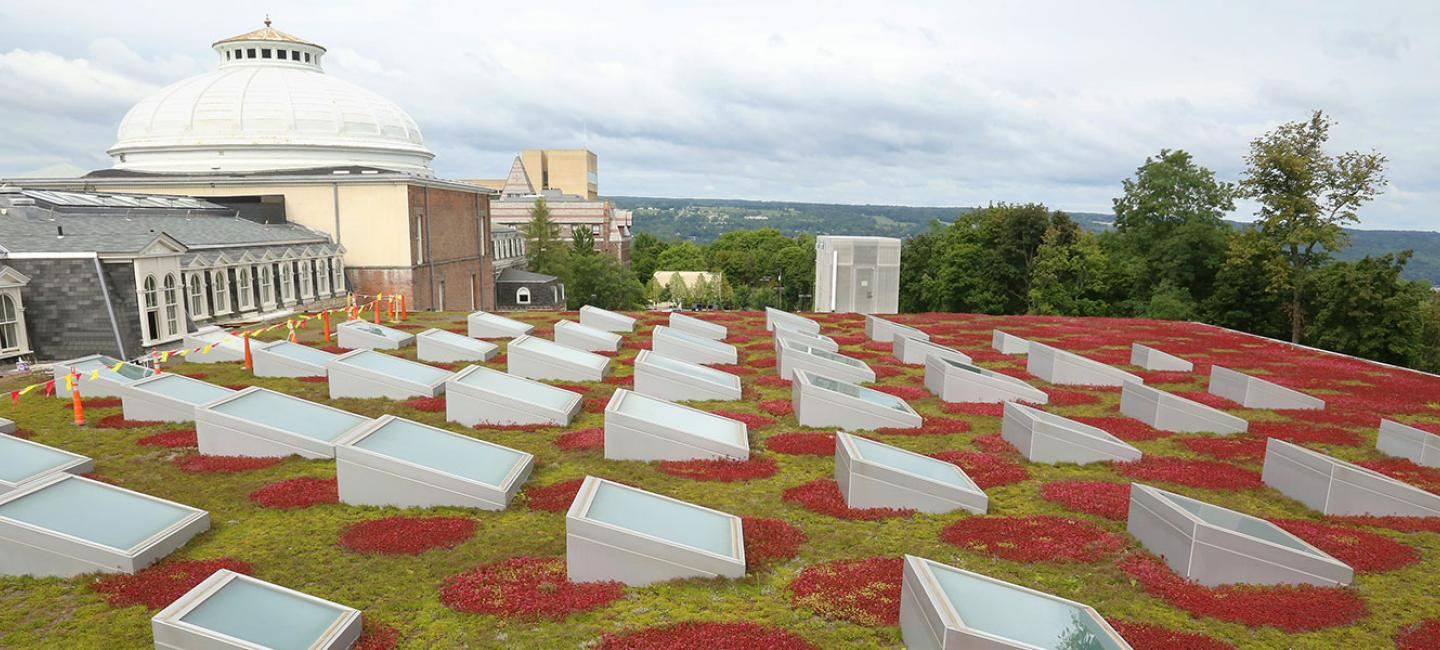 Milstein Hall's green roof from Rand Hall.