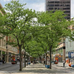 Leafy trees between low buildings on a city street converted to a pedestrian mall.
