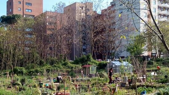 Community garden in foreground, with several high-rise buildings in the background