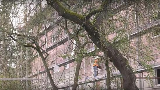 Two people on scaffolding working on a brick building behind a tree.