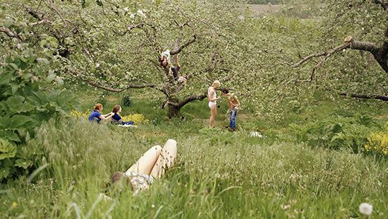 Photograph of people laying down in a meadow with two people climbing trees in the background.