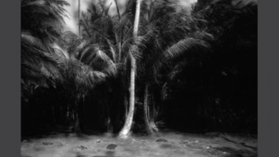 Muellner Palms