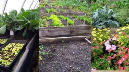 Three garden perspectives