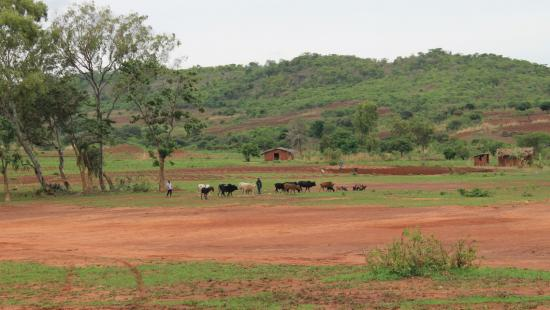 Two men standing on a farm with cows and trees and red soil.