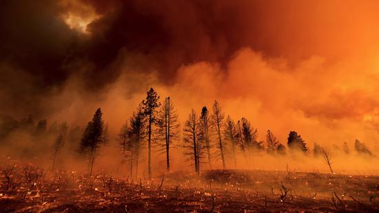 A wildfire burning trees, dark smoke.