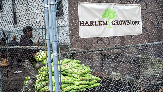 fenced garden area with bags of mulch and sign that says harlemgrown.org