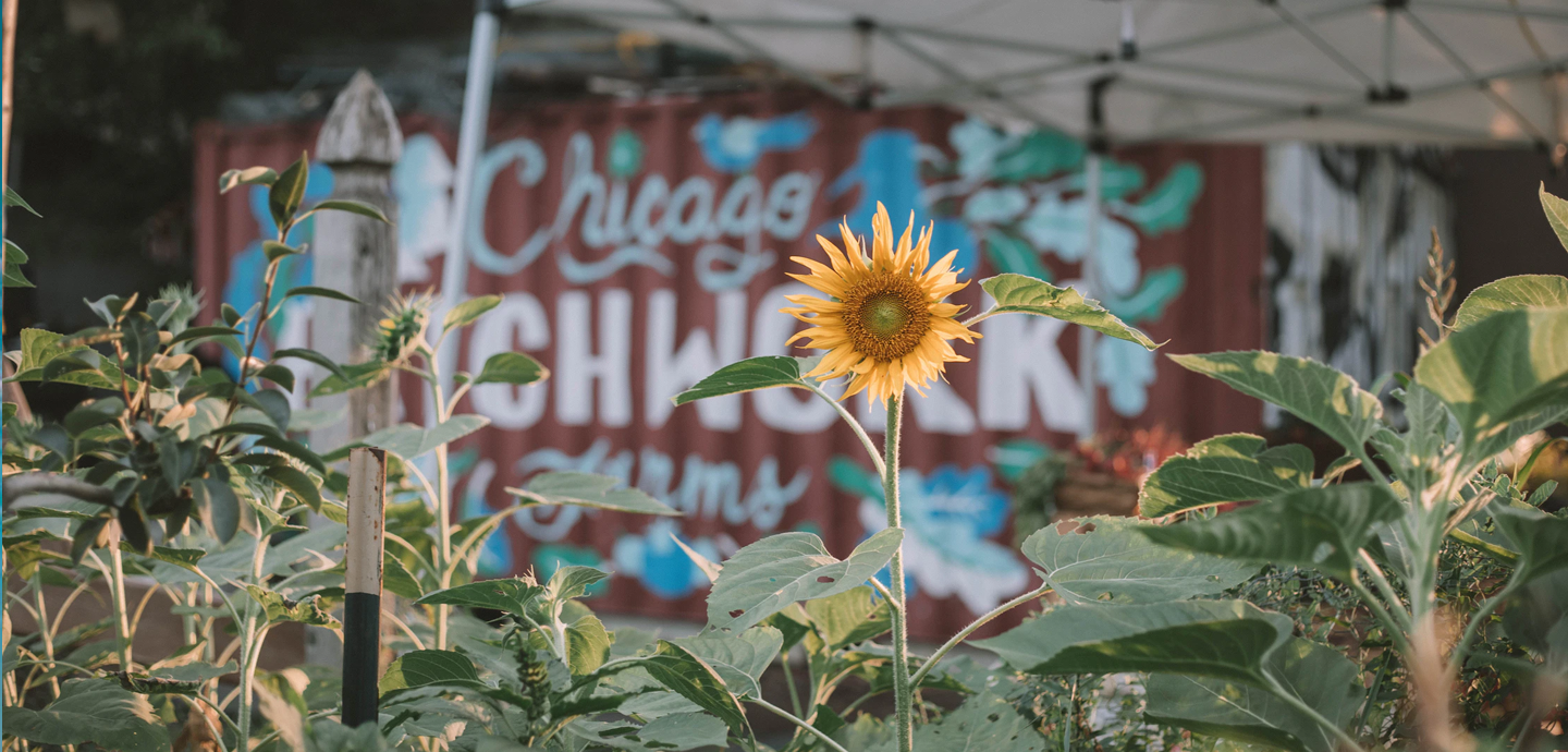 photo of sunflower with white tent and shipping container with graffiti