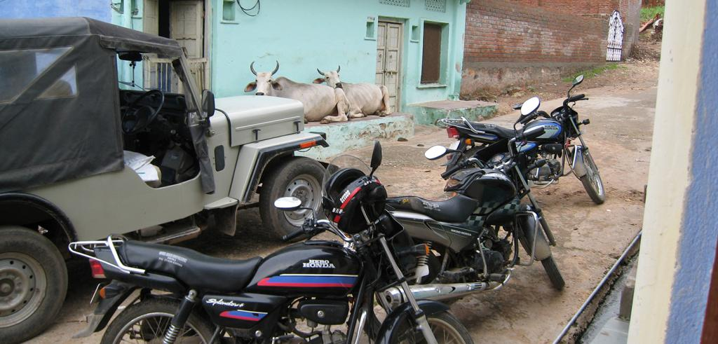 Two cows laying down behind three motorcycles and a jeep on a dirt road.