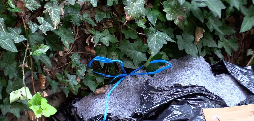 Green ivy leaves with a black opened trash bag against them with a thin blue plastic bow on top.