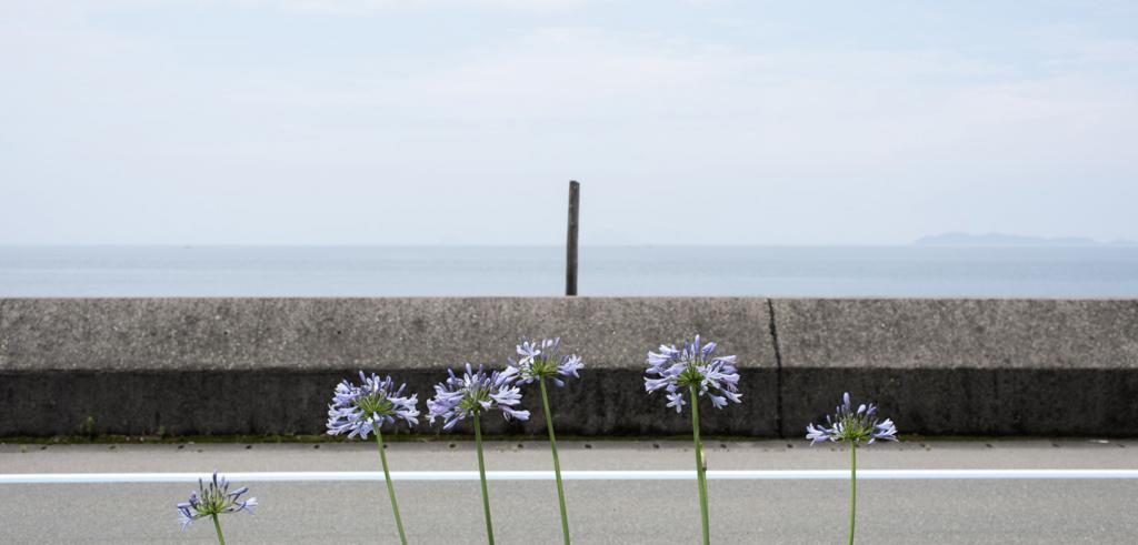 Photograph of six purple flowers with a wall and sky background.