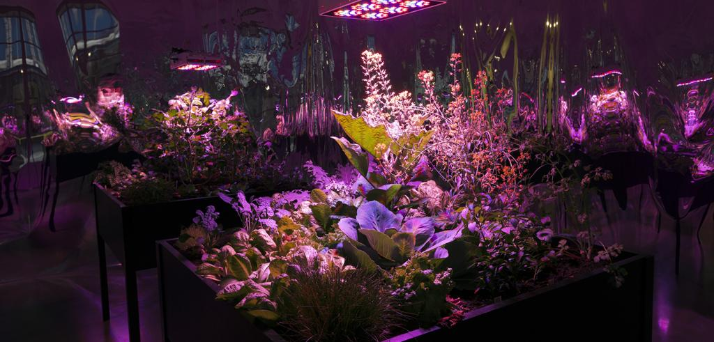An installation view image of Meg Webster's 2016 solar grow room with glowing magenta and violet lights