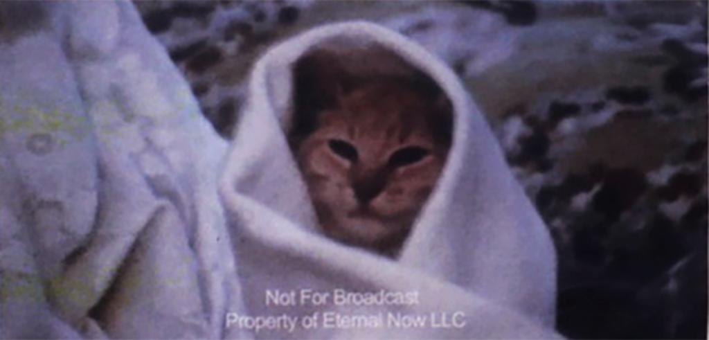 Still of a cat wrapped in a blanket.