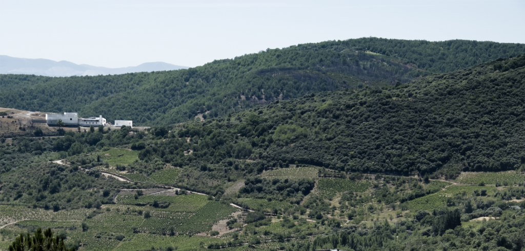 forested valley and mountains with a winery built on top of a hill