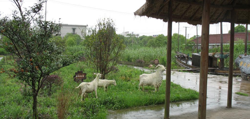 Goats in the grass near an awning.