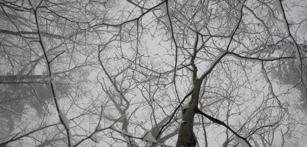 Snow covered tree branches outside while it is snowing.