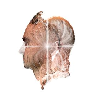 a computer manipulated portait of a man's head