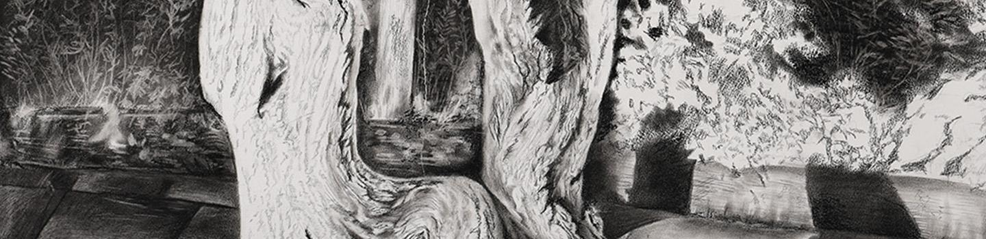 Black and white sketch of a tree stump set against a plant filled background.