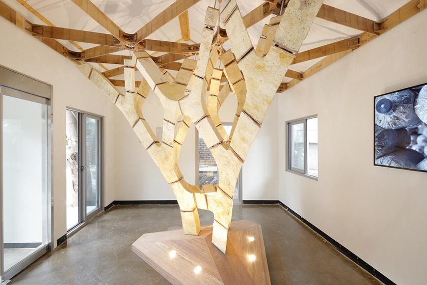 The interior of a room which is occupied by a wooden tree like structure, reaching upwards towards the spaces ceiling.