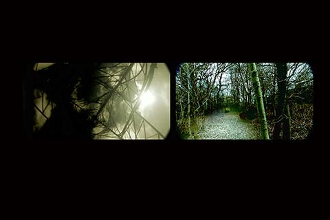Images of the forest projected side by side in a dark room