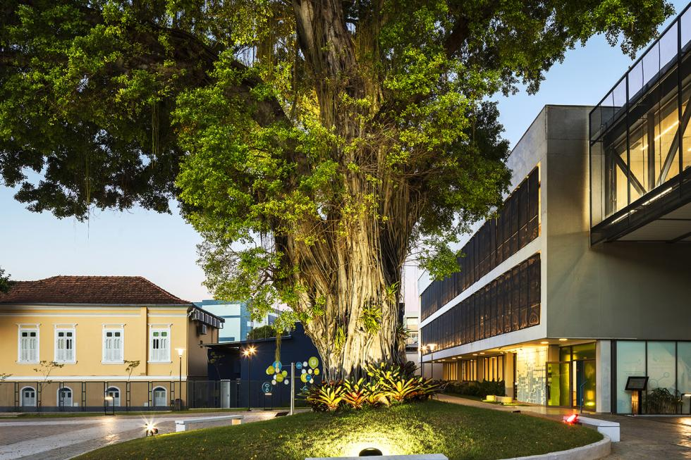 Photograph of a large tree illuminated from the base of its trunk, adjacent to a modern building.