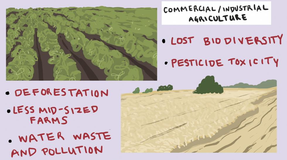 Hand drawn scenes depicting fields and farming that effect climate change with facts written next to them.