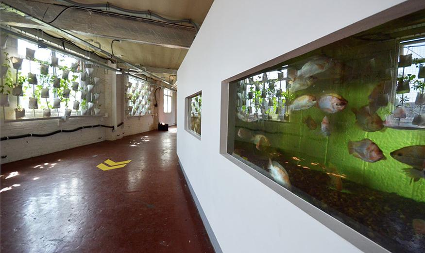 The interior of a building whose left wall consists of a series of windows with plants suspended in front, and left a series of fish tanks built into the wall.