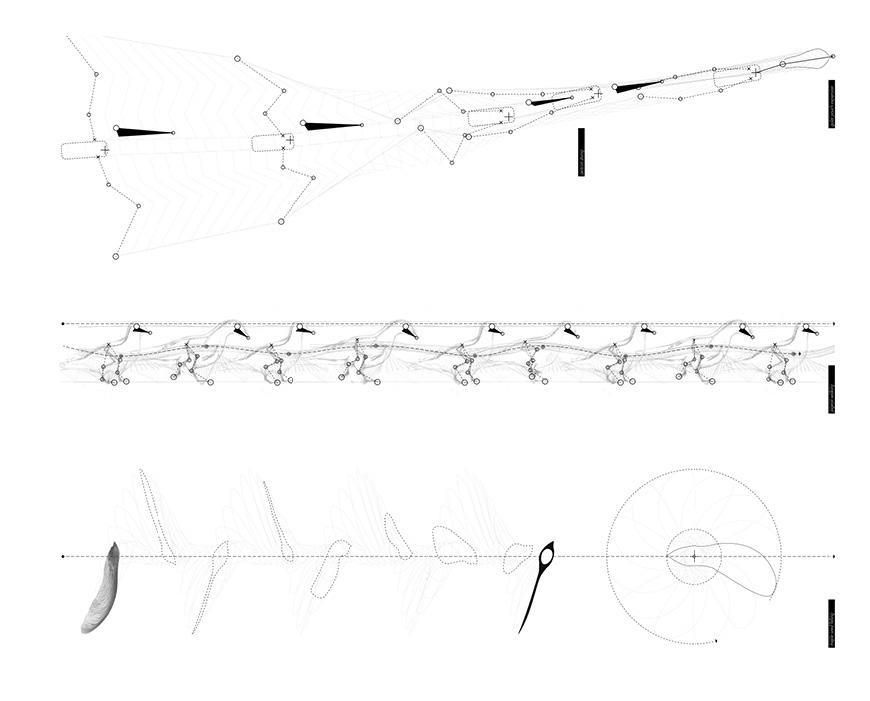 Illustration of Pigeon movement analysis.