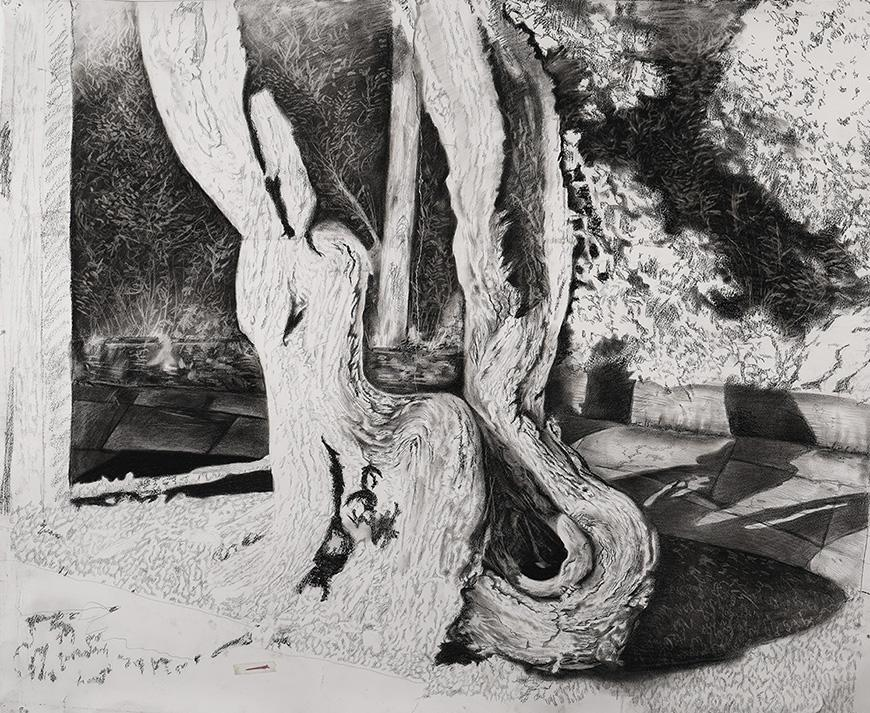 Sketch of a tree stump set with various shadows and plants in the background.